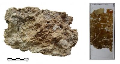 Fragment de sostre de fang del jaciment de Sant Jaume-Mas d'en Serrà (Alcanar, Montsià).